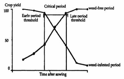 critical-weed-control-period