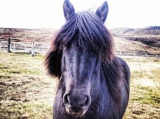 A Viking horse