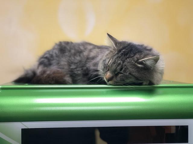 Коты в Сбербанке России