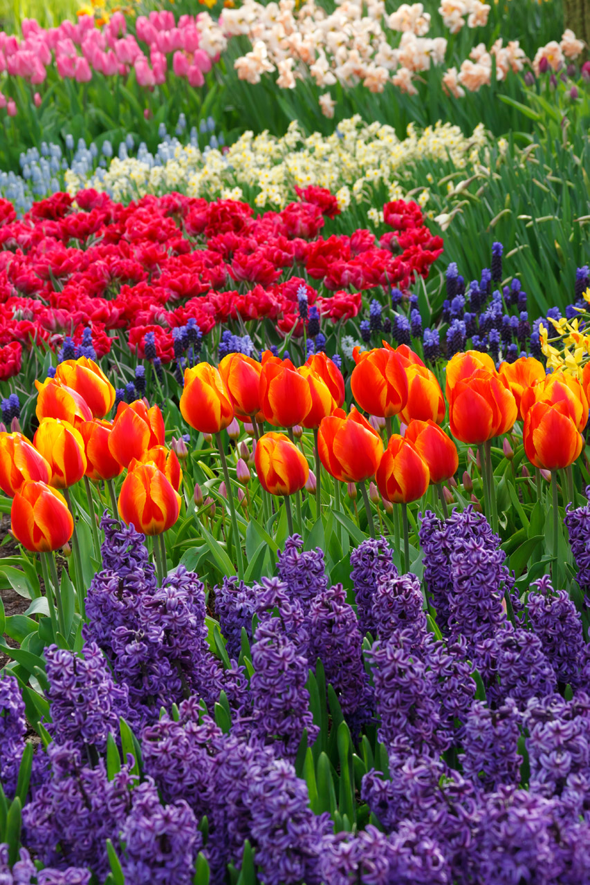 Garden Therapy: Rare Flowers