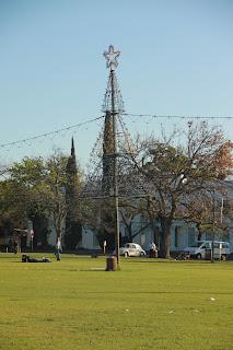 Weihnachtsbaum in Stellenbosch