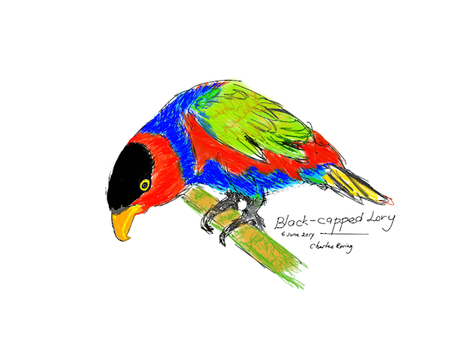Black-capped Lory in Redbubble store