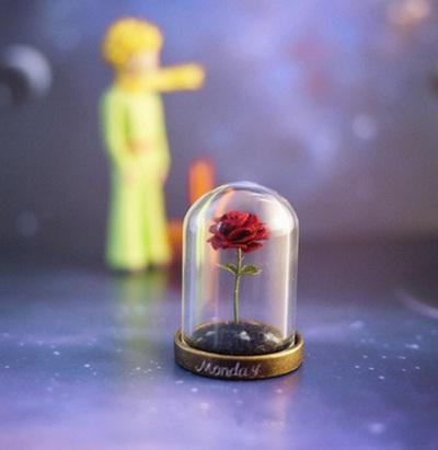Mawar Pangeran Cilik
