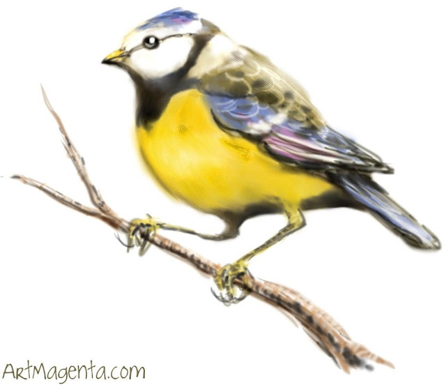 Blue Tit sketch painting. Bird art drawing by illustrator Artmagenta