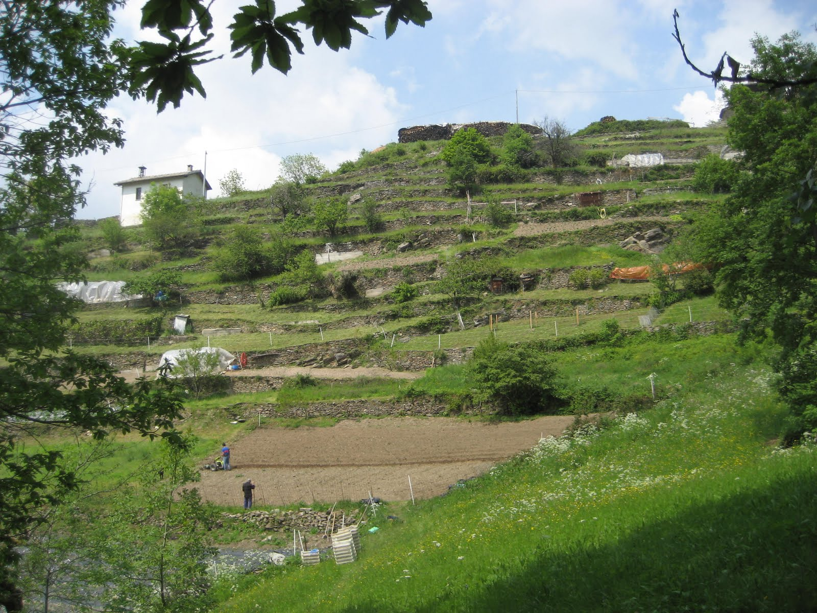 Bella baita view organic mountain farming in val germansca for What does terrace farming mean