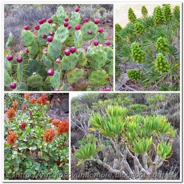 Más vegetación de la zona