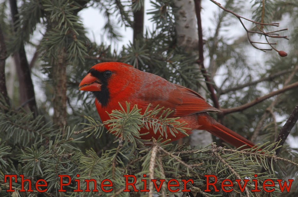 The Pine River Review