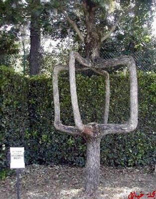 مجموعة من أغرب الاشجار حول العالم tree_12.jpg