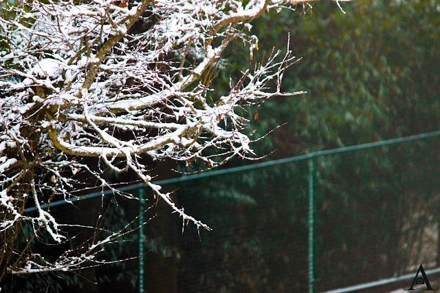 snow fall at dhanaulti