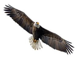 Native American Bald Eagle png clipart