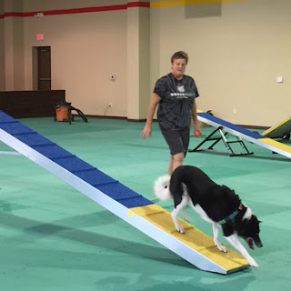 Lucky Dog Training Center with Greatmats Dog Agility Mats Green Color