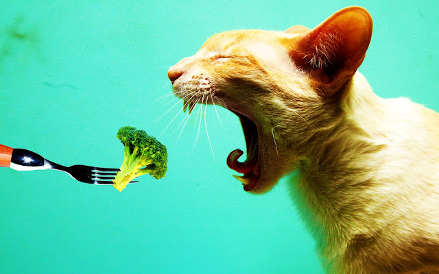cat eating broccoli