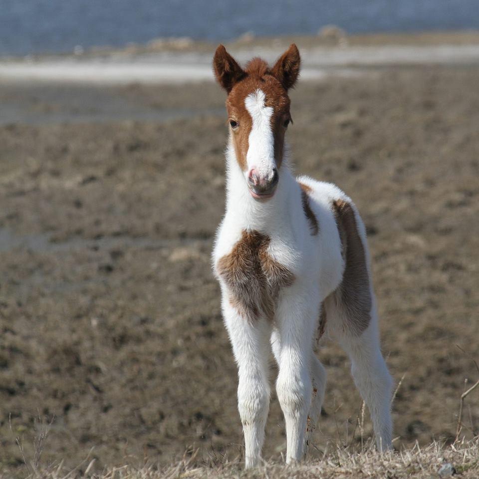 foals - photo #43