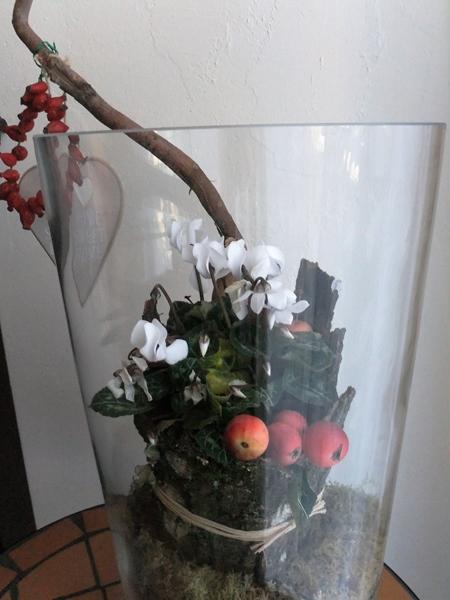 Alpenveilchen im Glas mit Baumrinde