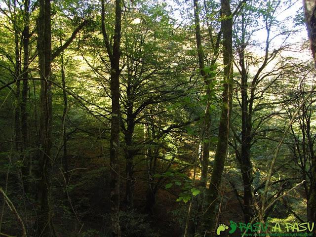 Bajando por el Bosque de Cea