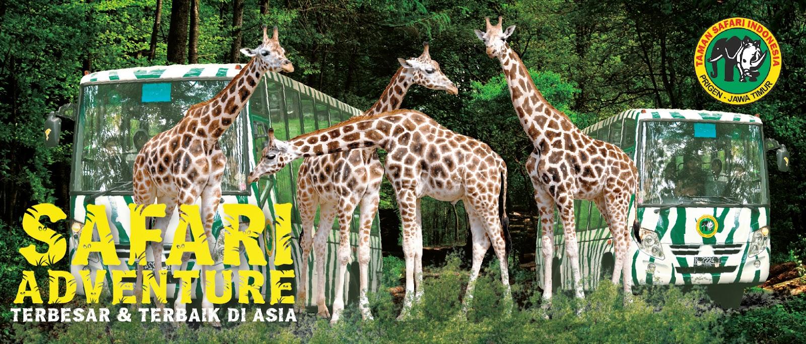Paket Wisata Bromo Taman Safari Indonesia 2