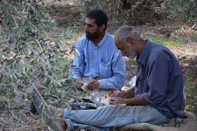 レバノンでオリーブ収穫作業の合間に休むシリアからの難民男性