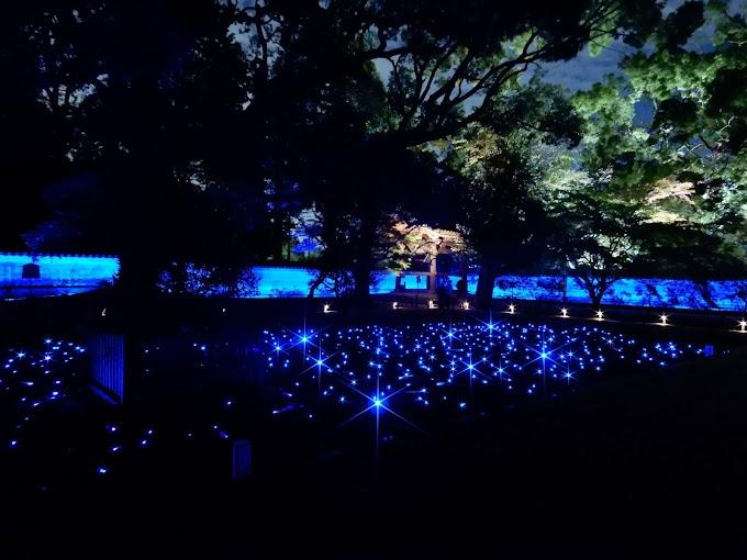 幻想的なライトアップ! 京都の青蓮院と知恩院の夜間特別拝観に行ってきた