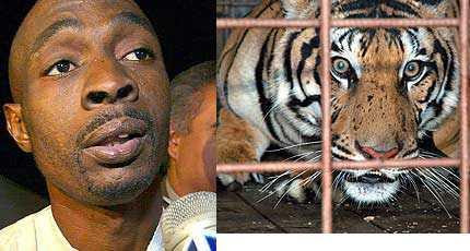In The End Ming Was Sent To Ohio Animal Shelter Antoine Stated Ironically This Is Both Y First Time Be Locked Up A Cage
