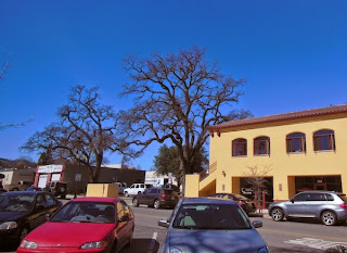 Oak Trees in Downtown Paso Robles, © B. Radisavljevic
