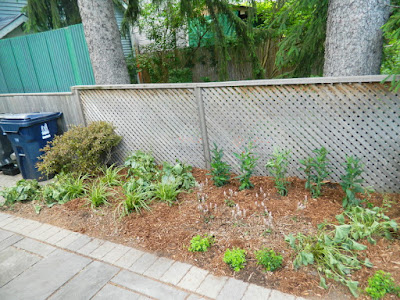 Oakwood Village Toronto backyard garden makeover after Paul Jung Gardening Services