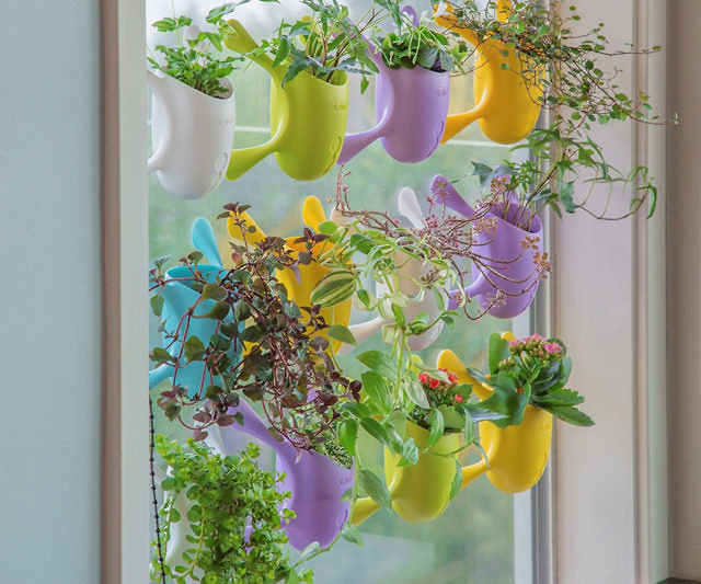 Easily add a little life and color to any part of your home using these indoor suctioned window/wall planters. Available in vibrant colors like lime, blue, green, and purple, each little planter can conveniently be placed on smooth surfaces and windows
