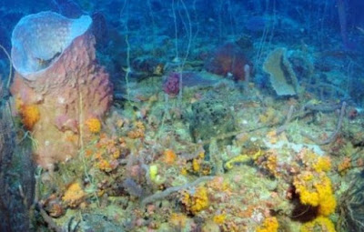 Temuan Baru Berisi Jenis Ikan Misterius di Zona Laut Baru