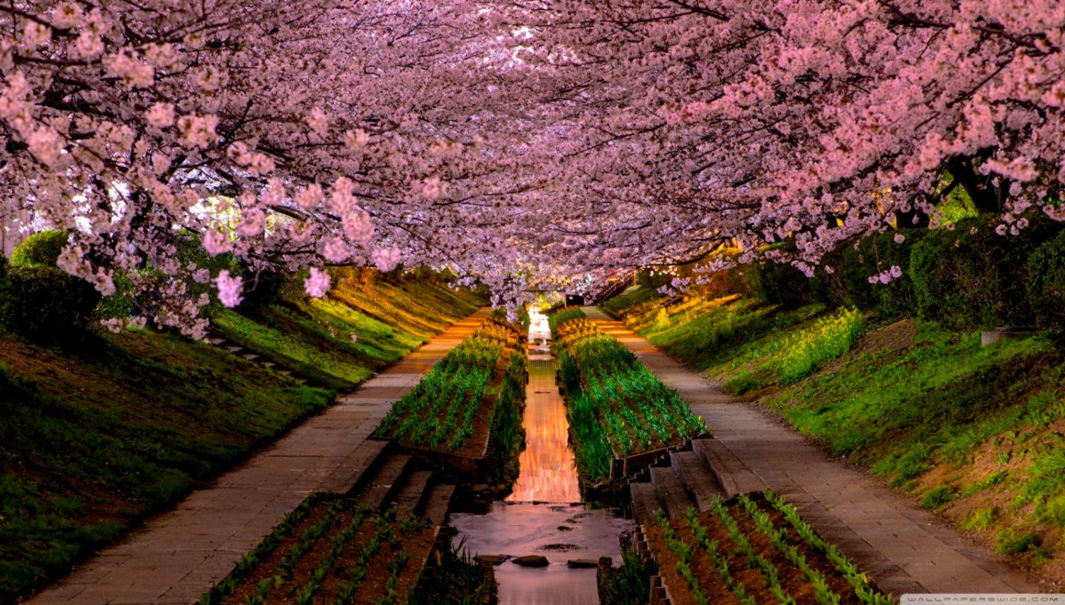 Get Spring Desktop Wallpaper Images Images
