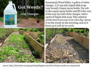 Now You Can Pin It!: Homemade Weed Killer