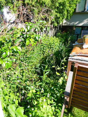 Toronto Riverdale back yard garden clean up before by Paul Jung Gardening Services