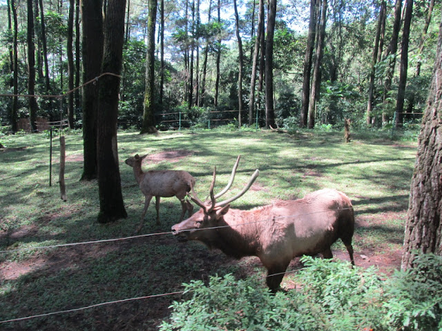 berbagai jenis hewan di Taman Safari Prigen Pasuruan