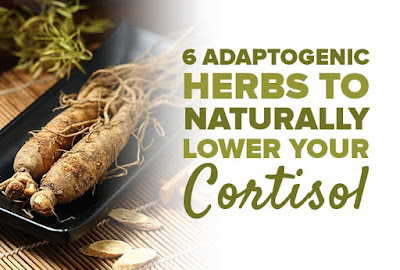 6 Adaptogenic Herbs to Naturally Lower Your Cortisol