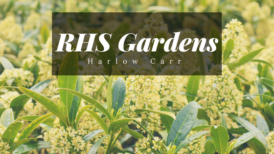 RHS Garden with yellow and green flowers in the background.