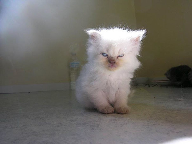 26 Adorable Pictures Of Angry Animals