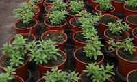 plantas jardin produccion