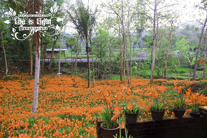 taman bunga jogja