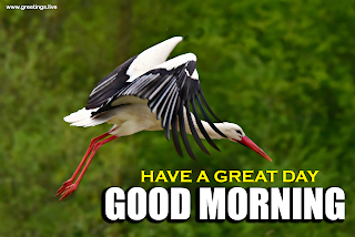 """ good morning "" greetings with flying bird"