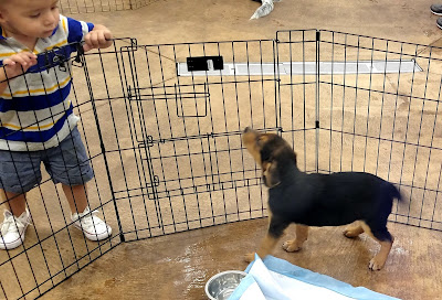 Little boy and puppy at PetSmart National Adoption Weekend
