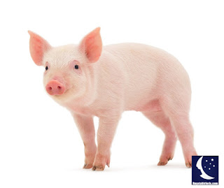 Rüyada domuz