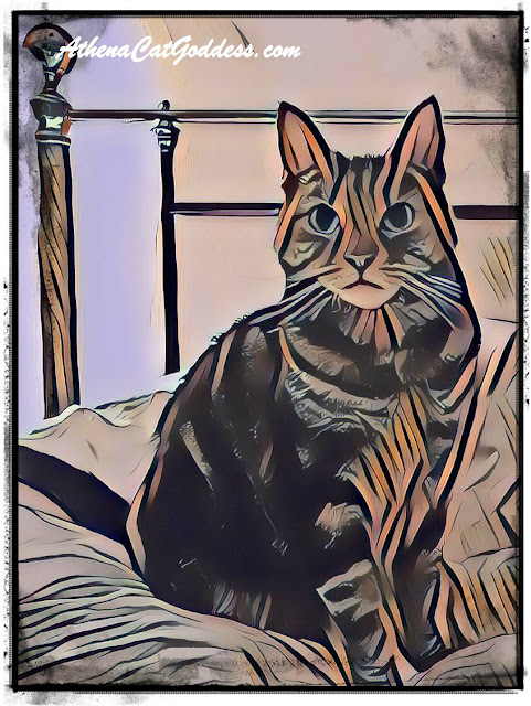 Caturday Art Sketch with PhotoLab