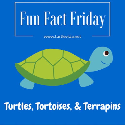 Fun Fact Friday: Turtles, Tortoises, & Terrapins