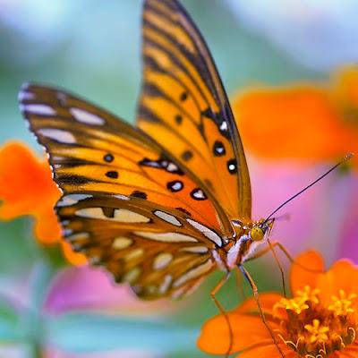 Colorida imagen de mariposa color naranja