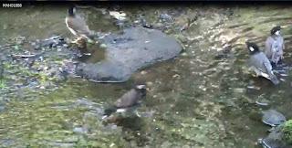小鳥の水浴び画像