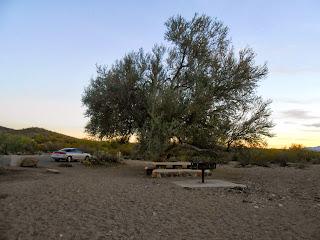 ironwood tree at ironwood park in tucson mountain park arizona