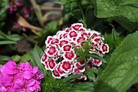 Images Correspondant A Jardin Et Fleur Jardin Et Fleurs
