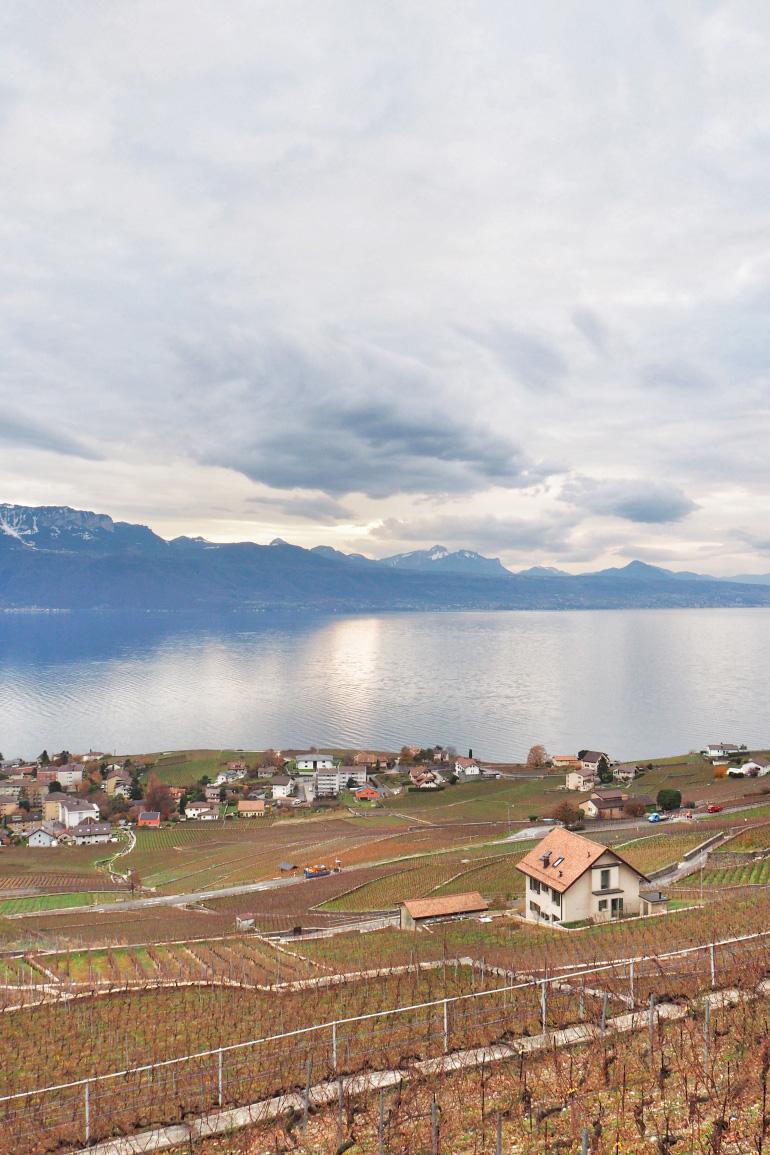 Vignes aux alentours de Lausanne en Suisse