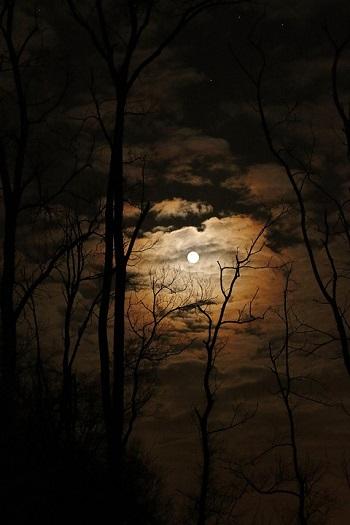 nuit pleine lune arbre branches