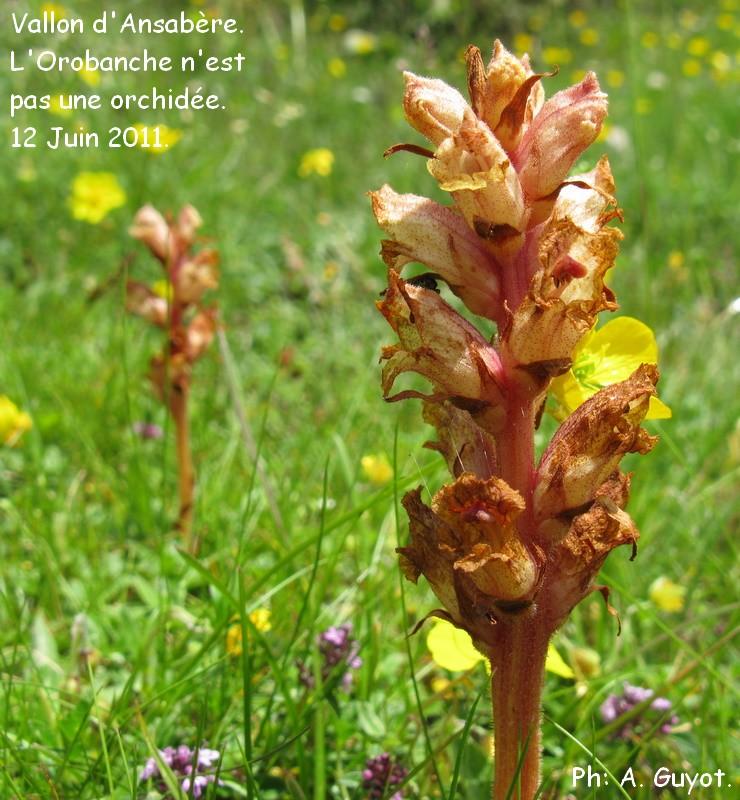 orchid es du b arn la sortie du 12 juin au vallon d 39 ansab re. Black Bedroom Furniture Sets. Home Design Ideas