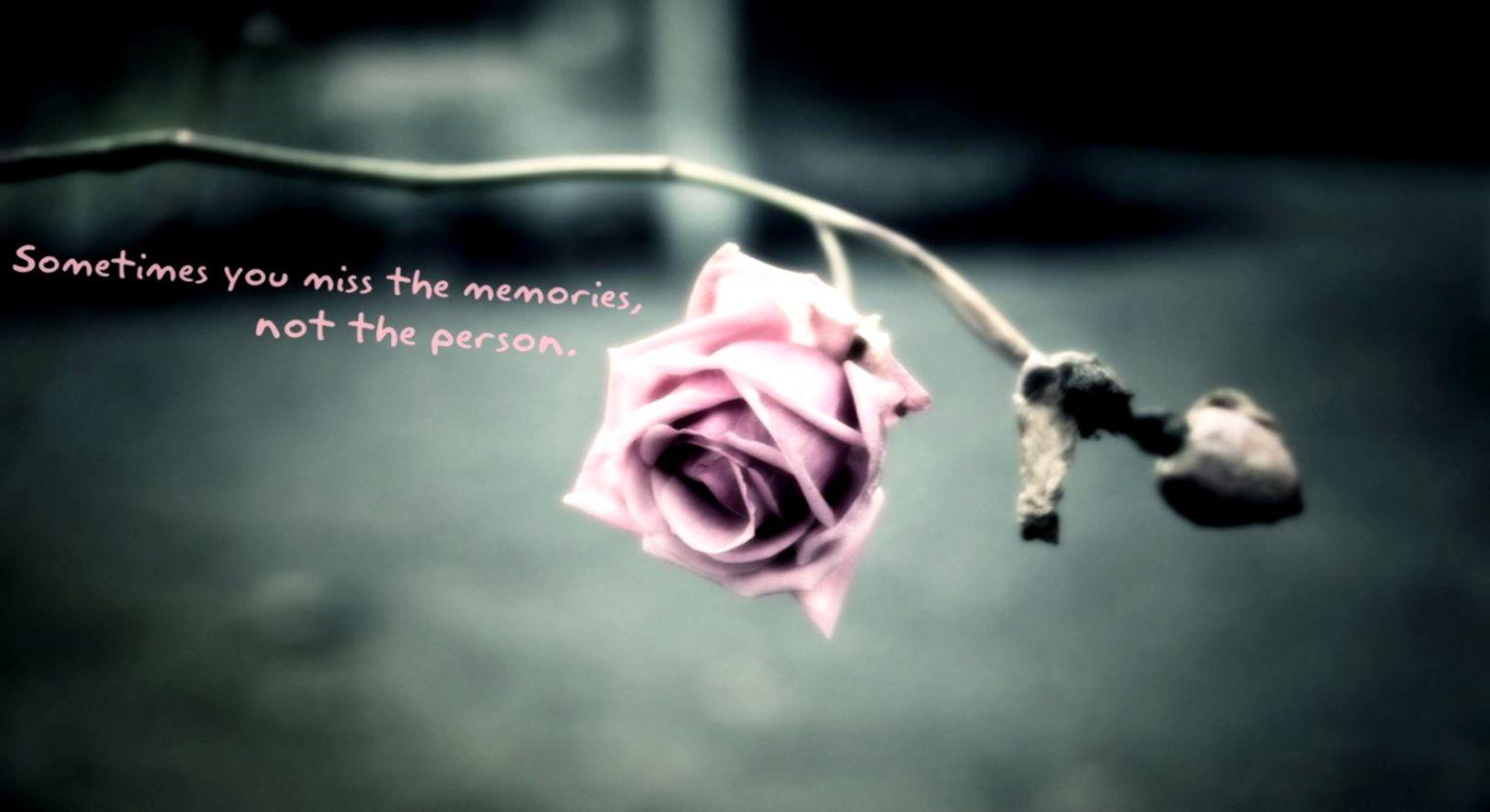 Flowers Facebook Memories Flower Quotes Pink Words Rose Love