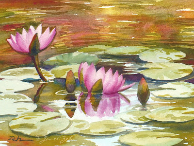 Pink waterlilies bloom in a garden pond in Hawaii